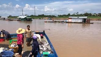 Đã tìm ra nguyên nhân 1.000 tấn cá chết trên sông La Ngà