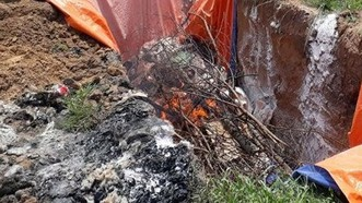 Phát hiện 40 tấn thịt heo ở cơ sở giò chả bị nhiễm dịch tả heo châu Phi