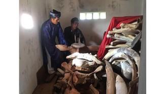 Quảng Ngãi: 14 tỷ đồng phục dựng bộ xương cá voi