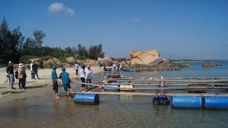 Quảng Ngãi: Tháo dỡ lồng bè, chấm dứt nuôi cá trong vùng biển Dung Quất