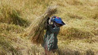 EU áp thuế trở lại đối với gạo nhập khẩu từ Campuchia và Myanmar