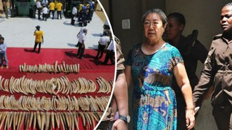 中國女商人也是人稱「象牙女王」的楊鳳蘭(圖右二)19日遭坦桑尼亞當局判處15年有期徒刑。(圖源:AFP)