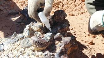Phát hiện nghĩa địa khủng long hóa thạch 220 triệu năm