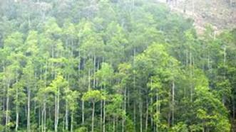 Nghệ An: Ban quản lý rừng phòng hộ nợ tiền dân?