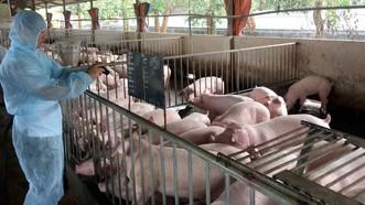 Công ty Sagrifood phòng ngừa an toàn sinh học để chống dịch ASF lây lan