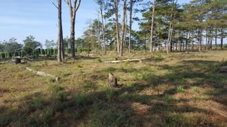 Bắt đối tượng nhận bảo vệ rừng để phá rừng