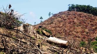 """Rừng liên tục """"biến mất"""" tại Bình Định: Chưa nghiêm thực hiện việc đóng cửa rừng!"""