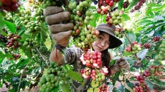 Khai mạc Ngày Cà phê Việt Nam