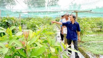 Trồng rau sạch đạt tiêu chuẩn VietGAP ở huyện Trảng Bàng, tỉnh Tây Ninh