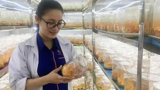 Kiểm tra chất lượng sản phẩm Đông trùng hạ thảo sau thu hoạch