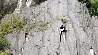 珍稀的白背葉猴在此棲息。(圖源:互聯網)
