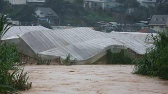 Nước suối dâng cao tràn vào nhà kính gây thiệt hại lớn. Ảnh: ĐOÀN KIÊN