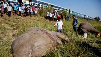 Một vụ xe lửa đụng chết voi ở bang Assam, Ấn Độ, tháng 11-2017. Ảnh: AP