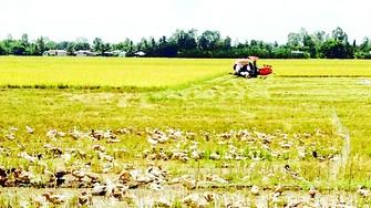 Vựa lúa ĐBSCL chịu thiệt hại do thiếu phù sa và hạn mặn