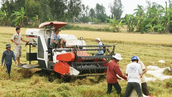 Yêu cầu doanh nghiệp đẩy nhanh thu mua lúa cho dân