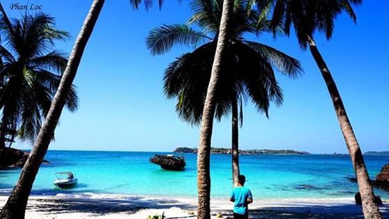 椰子樹、沙灘、大海構成美麗的景色。(圖源:互聯網)
