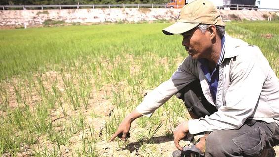 Ruộng lúa tại Quảng Trị nứt nẻ. Ảnh: NGUYỄN HOÀNG