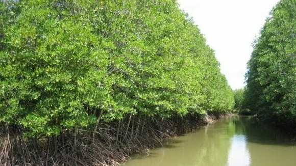 Coastal forests in Ca Mau province's Ngoc Hien district (Photo: VNA)