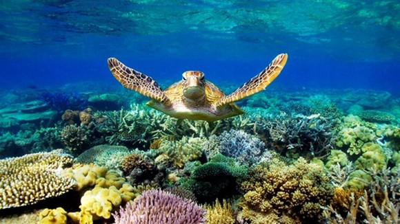 大堡礁海底世界。