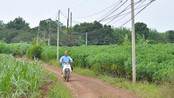 Khu vực xã Suối Trầu, nơi sẽ xây dựng sân bay, vẫn là đồng quê yên ả, chưa có gì thay đổi