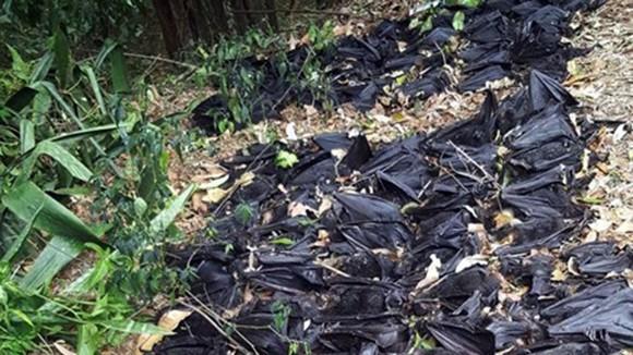 Hàng ngàn con dơi chết trong sân nhà