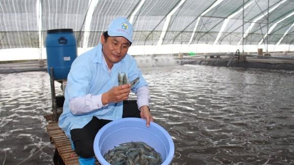 澳大利亞聯邦科學與CSIRO:協助目前放養草蝦效率提高三倍,並通過改善投產、應用及良好發展試行養殖及有效管理養殖區規劃事宜以提高生產效率。(示意圖源:互聯網)