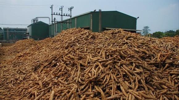 輸往韓國木薯遞增。(示意圖源:互聯網)
