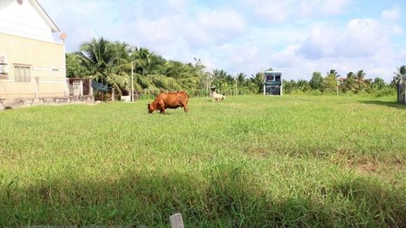Nhiều khu đất ở khu vực phường Phú Tân, thành phố Bến Tre được phân lô để sang nhượng. (Ảnh: Trần Thị Thu Hiền/TTXVN)