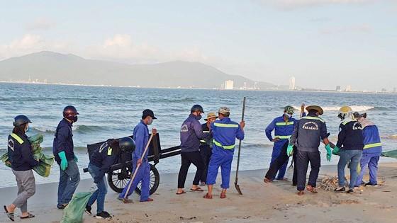 Image result for Phát hiện cá chết hàng loạt dọc bờ biển Đà Nẵng