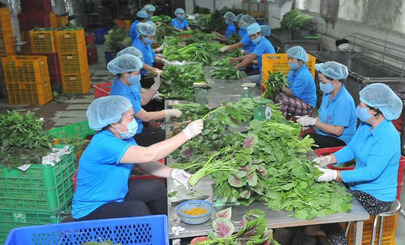 12% hợp tác xã nông nghiệp có dịch vụ chế biến, tiêu thụ nông sản