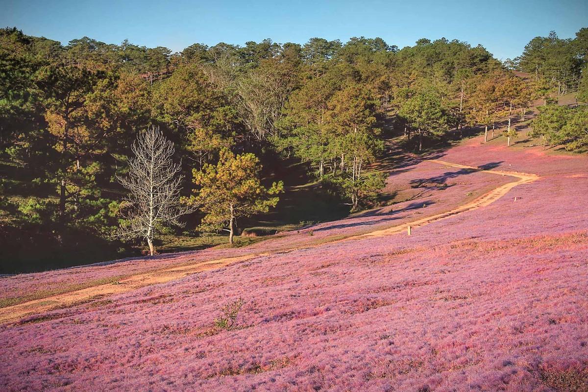 Image result for hình ảnh Thảo nguyên cỏ hồng đà lạt