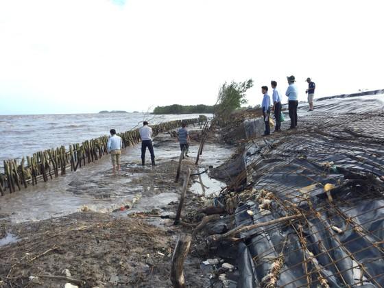 Khẩn cấp cứu hộ đê biển Tây tỉnh Cà Mau ảnh 1