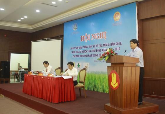 Sơ kết sản xuất trồng trọt năm 2018 các tỉnh duyên hải Nam Trung Bộ và Tây Nguyên ảnh 1