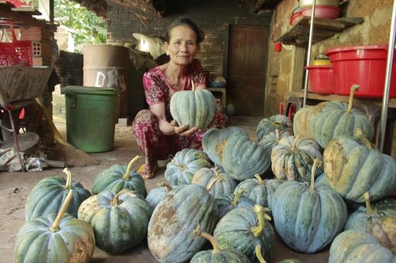 Quảng Ngãi: Bí đỏ rớt giá còn 5.000 đồng/kg, nông dân lo lắng ảnh 3