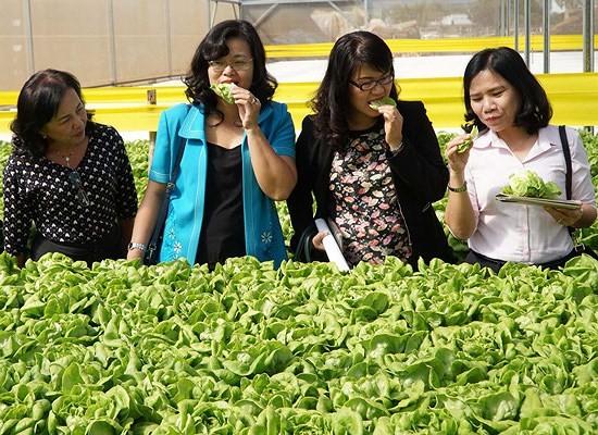 Đưa giám đốc trẻ thực tập nông nghiệp tại Nhật Bản ảnh 1
