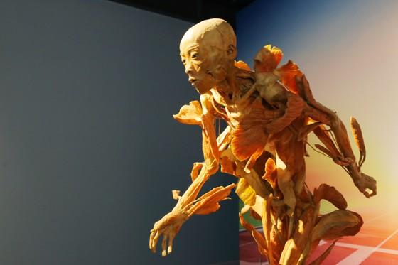 """Tạm ngừng triển lãm """"Sự bí ẩn đặc biệt của cơ thể người"""" ảnh 1"""