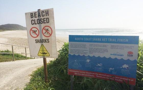 Thoát khỏi hàm cá mập nhờ ván lướt sóng ảnh 2