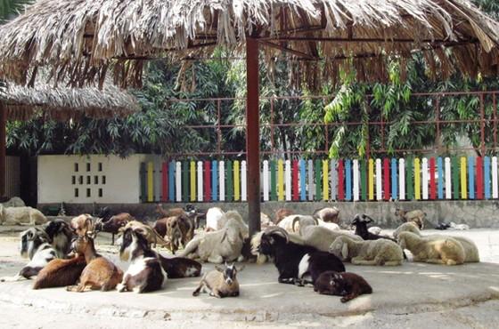 西貢動物園 —— 市民假日好去處 ảnh 1