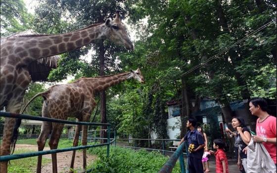 西貢動物園 —— 市民假日好去處 ảnh 2