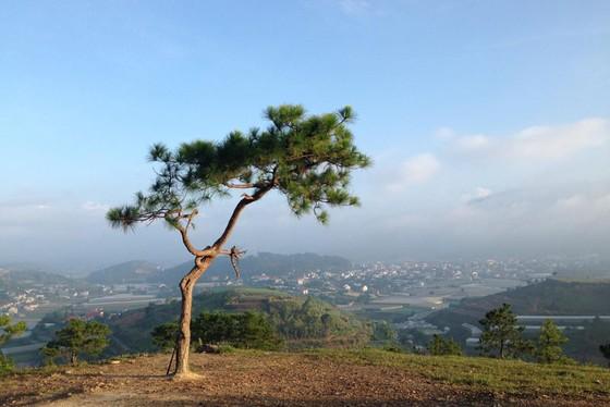 天福德山丘 ——大勒市中的夢幻仙境 ảnh 1