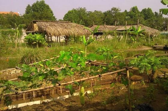 現代城市中之綠色農場 ảnh 1