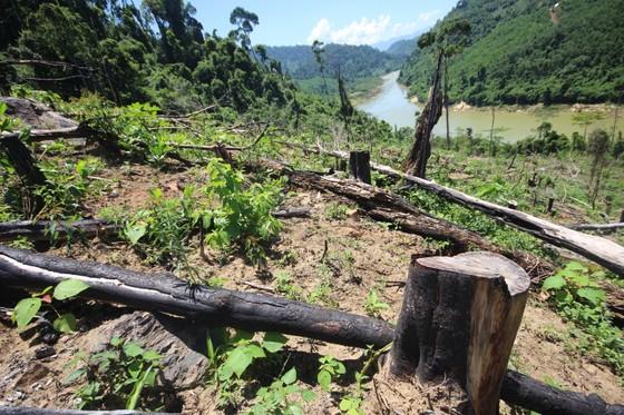 Buông lỏng quản lý, cả trăm ha rừng ở Quảng Nam bị tàn phá ảnh 1