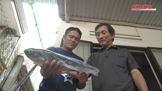 Ngư dân Quảng Nam bắt được cá nghi là cá sủ vàng  ảnh 4