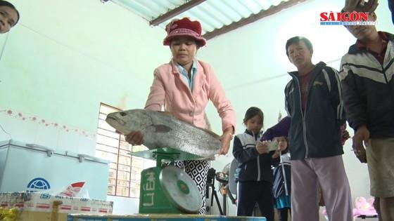 Ngư dân Quảng Nam bắt được cá nghi là cá sủ vàng  ảnh 6