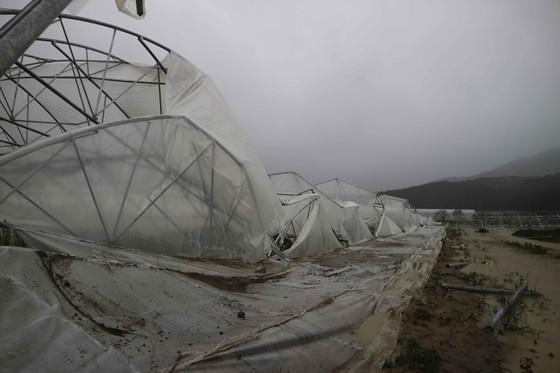 Lâm Đồng tan hoang sau bão 12 ảnh 9