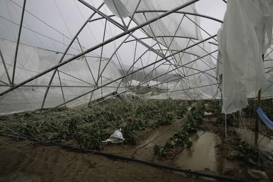 Lâm Đồng tan hoang sau bão 12 ảnh 10