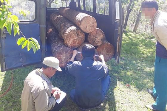 Quá trình mật phục, lực lượng chức năng bắt quả tang xe ô tô mang 2 biển kiểm soát đang chở gỗ ra khỏi rừng.  Rạng sáng ngày 19-3, lực lượng thuộc Ban quản lý rừng phòng hộ đầu nguồn Đa Nhim (Lâm Đồng) đã vây bắt một vụ cưa trộm thông cổ thụ