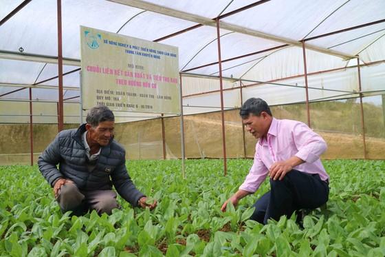 Phát triển sản xuất nông nghiệp hữu cơ theo hướng bền vững tại Lâm Đồng ảnh 1