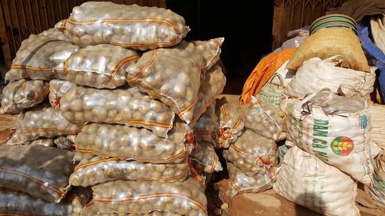 Bắt quả tang trộn đất vào khoai tây Trung Quốc để bán giá cao ảnh 6