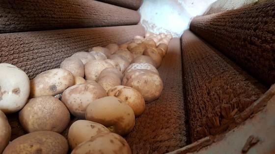Bắt quả tang trộn đất vào khoai tây Trung Quốc để bán giá cao ảnh 2